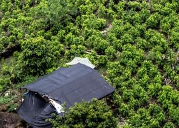 Cultivos de coca en Colombia llegan a los niveles más altos registrados 2