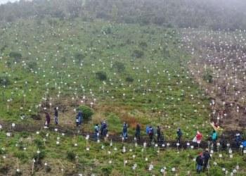 En Colombia, plantan árboles con cenizas de víctimas de la pandemia 3