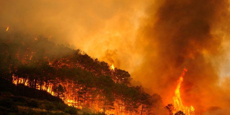 """España reporta """"situación crítica"""" por incendios que han arrasado miles de hectáreas 1"""