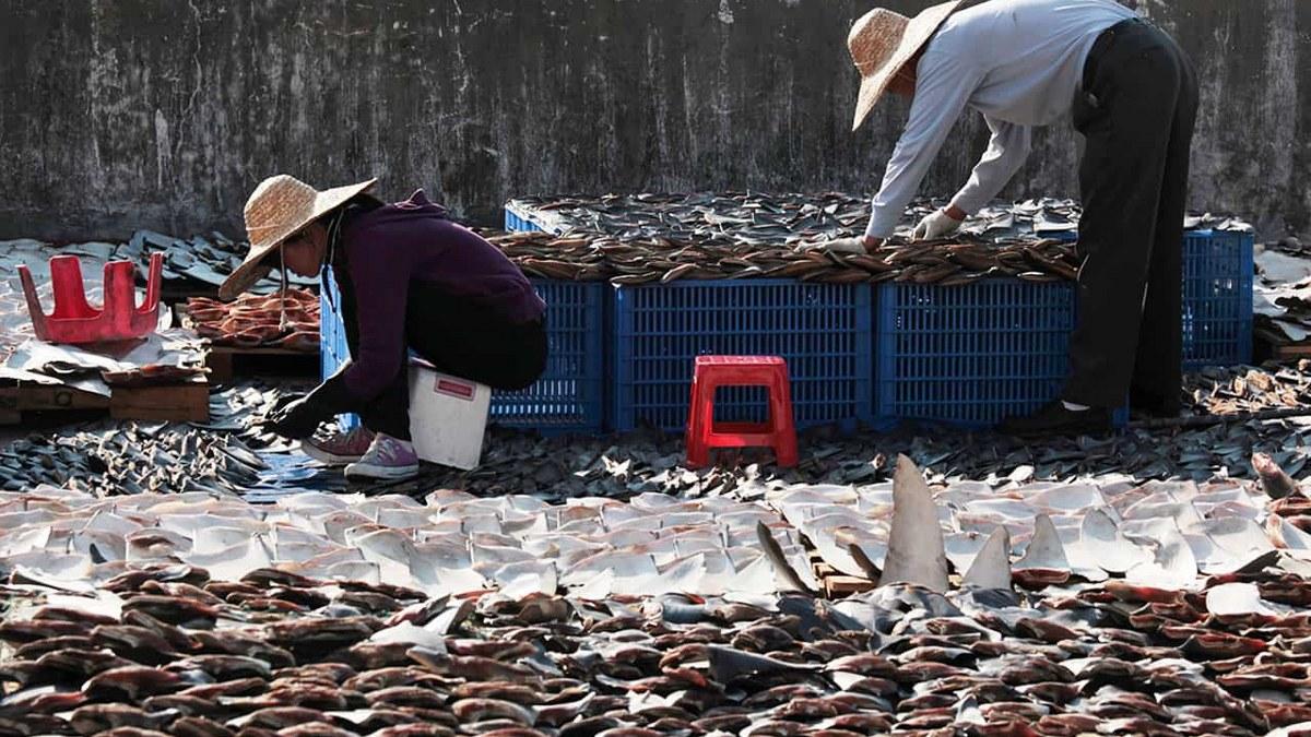 Flotas pesqueras chinas agotan las poblaciones de peces del mundo; depredan océanos 2