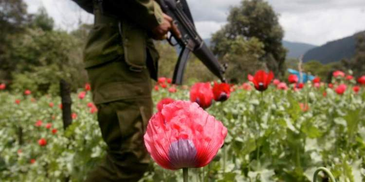 Asesinan y desplazan a familias por el control de plantíos de amapola y marihuana en Guerrero 1