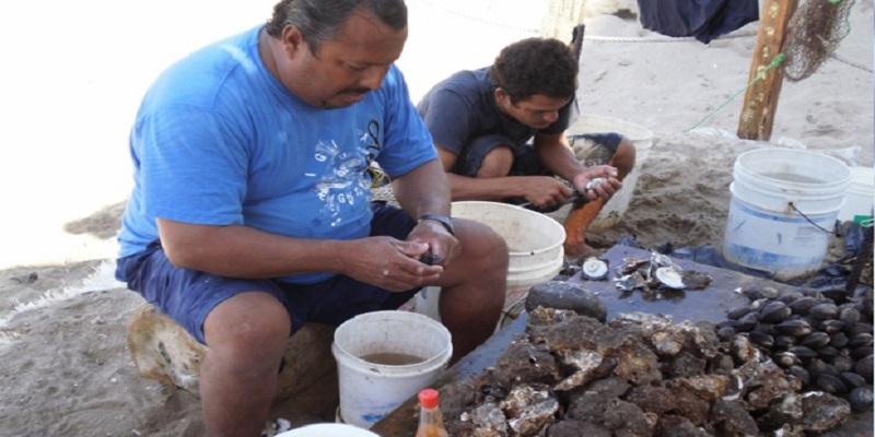 Salud Acapulco decomisa ostiones por veda sanitaria