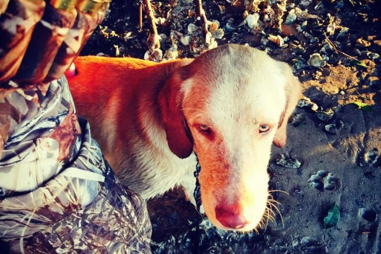 Baked In The South Update and a Duck Hunt