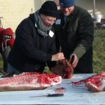 Hog Harvest 2012 students learn the art of seam butchery.
