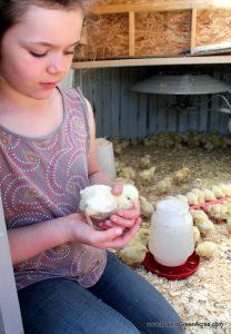 Rachel with her chicks.