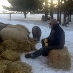 As long as they have straw, the wooly pigs are happy!
