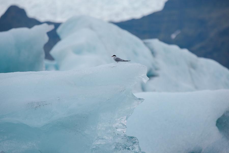 glacierlagoonBLOG-137 Iceland's Glacier Lagoon Our Life Travel
