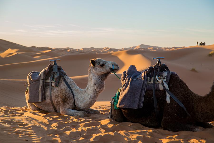Sahara-Desert-175 The Sahara Desert Our Life Travel