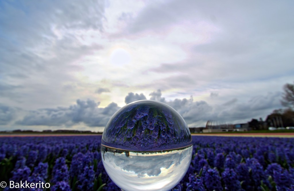 Crystal ball and narcissus flowers