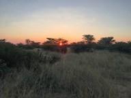 Kalahari bushpeople