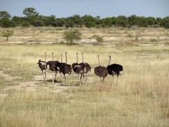 RTW_2017_dag_0039_namibia (07c)