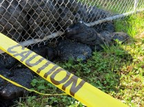 12.1419585917.lava-seeping-through-the-fence
