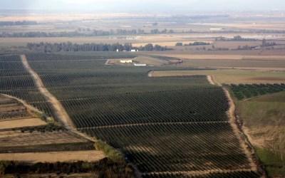 El Plan Director del Olivar: una apuesta necesaria por el olivar andaluz