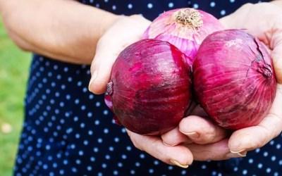 ¿Cómo cultivar la cebolla? Descubre todo sobre sus cuidados