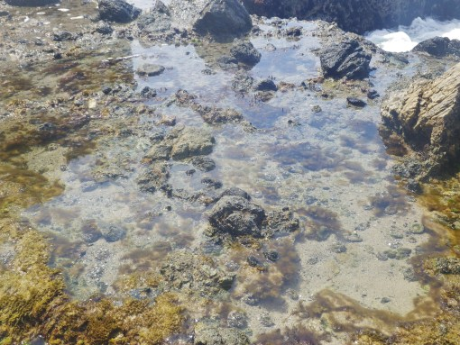 Tide Pools near Pirate Tower
