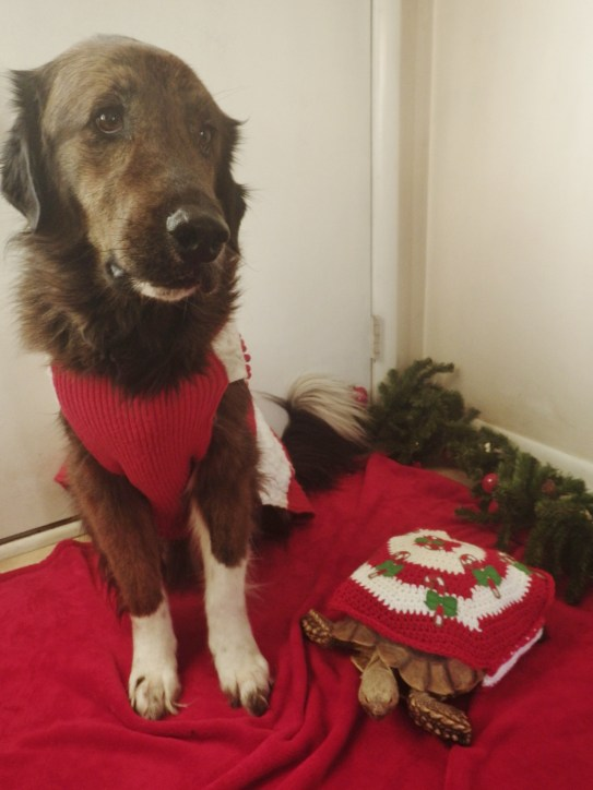 holiday clothing for pets