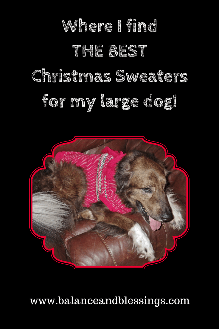 Where I find the best Christmas sweaters for my large dog!