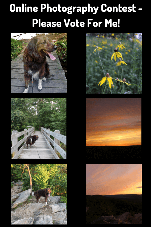 Online Photography Contest - Please Vote For Me!