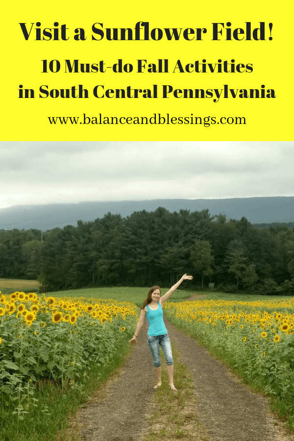 Visit a Sunflower Field! fall activities in south central pa