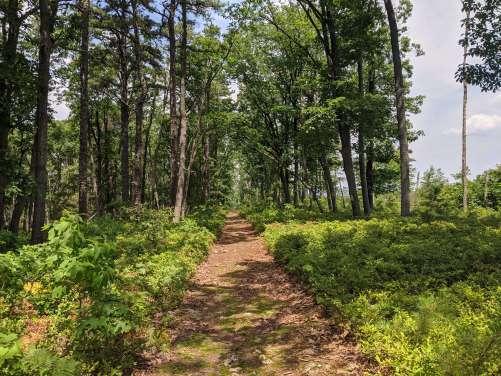 healthy summer habits hiking