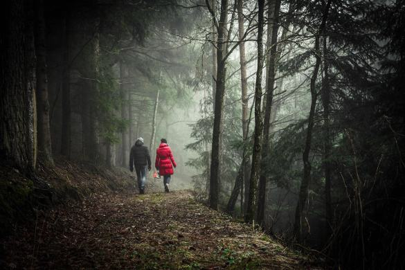 A couple is shown walking in a scenic forest. If you develop the personal qualities of compassion and contentment you will find happiness