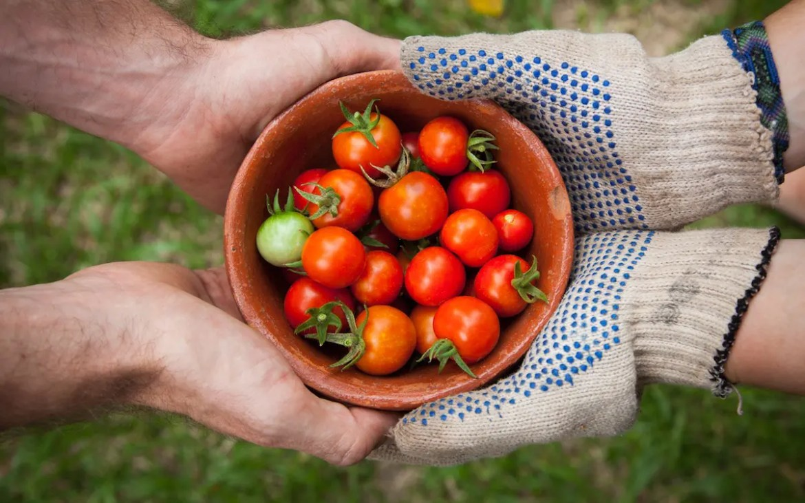 An image shows two individuals jointly holding a bowl of freshly picked tomatoes. One of the individuals is wearing gardening gloves. This picture serves as the featured image for Balanced Achievement's article on mindful eating.