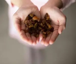 An image shows the hands of a young woman holding around 20 raisins. This picture represents the practice of mindful eating which is taught in Mindfulness-Based Stress Reduction (MBSR).