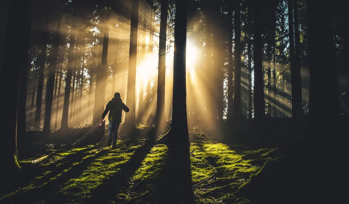 An image shows a man walking in the forest as the sun shines down in mystical fashion. This picture is used as the featured image of Balanced Achievement's article titled 'The Weekly 5: Famous Naturalists on the Wisdom of the Wilderness.'
