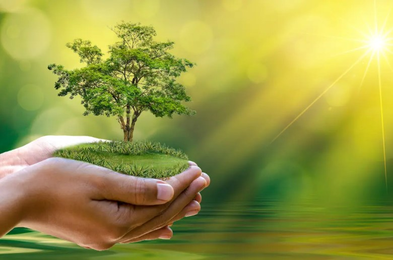 A computer generated image shows a woman holding a beautiful green tree as the sun shines in the background. This photo is used as the featured image for Balanced Achievement's article '20 Inspirational World Environment Day Quotes.'