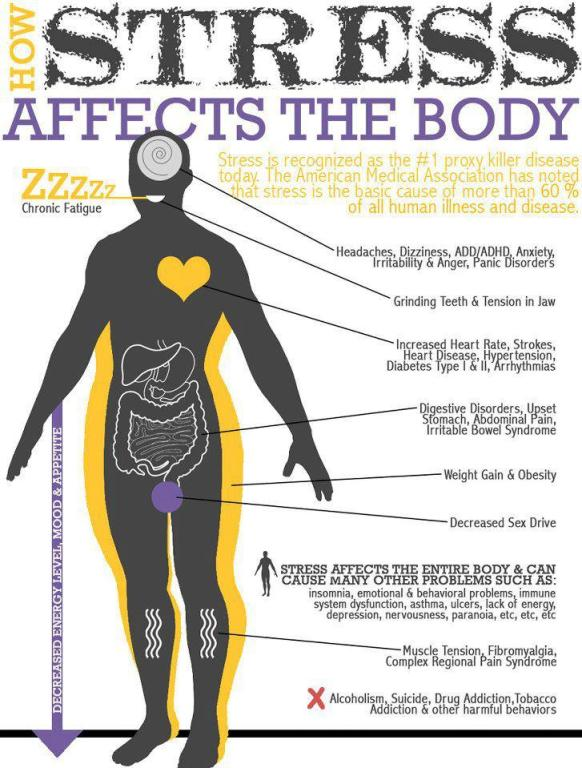 how-stress-affects-the-body