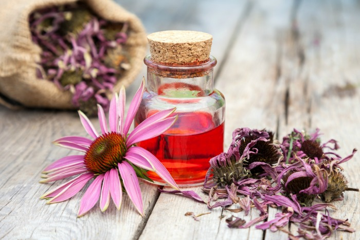 Echinacea-for-allergies
