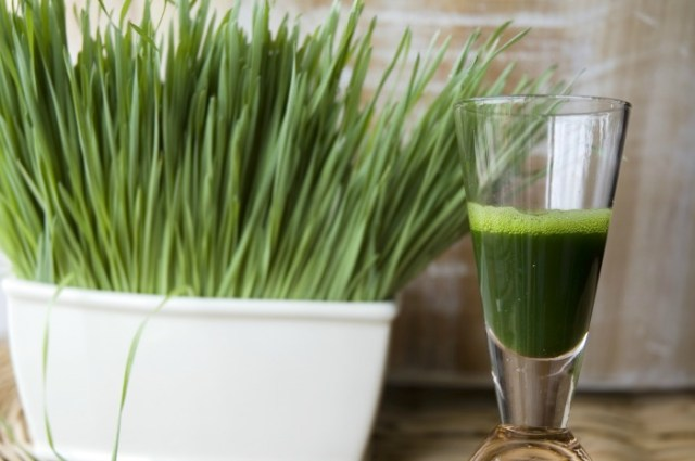 benefits-of-wheatgrass