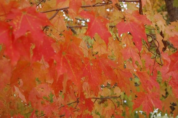 leaves_4