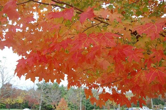 leaves_7
