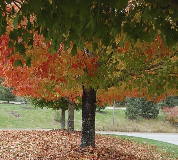 leaves_9