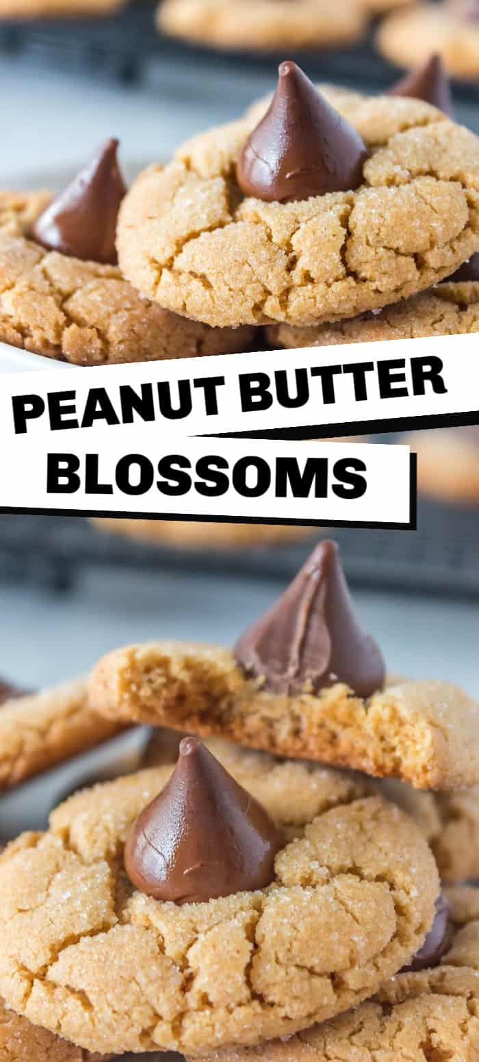 Peanut butter blossoms are soft and chewy sugar-coated peanut butter cookie topped with a Hershey's chocolate kiss. They make the perfect Christmas cookie or holiday treat.