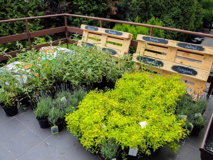 Image result for plants in the roof