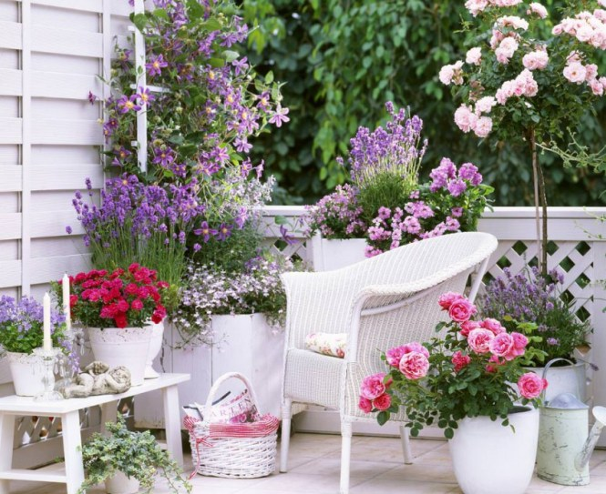 Small Rose Garden Growing Roses In Containers Balcony
