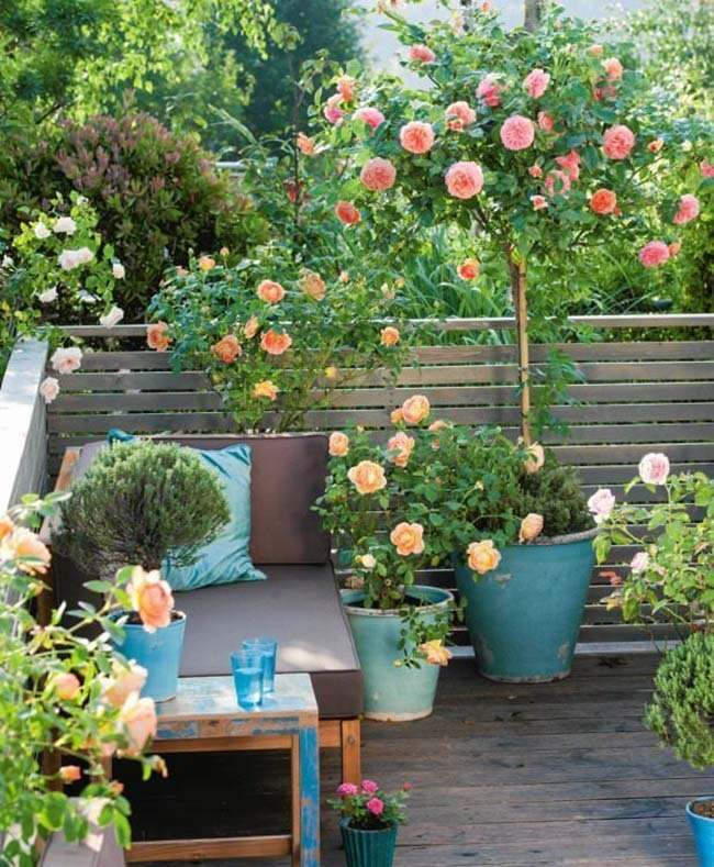 Small Rose Garden   Growing Roses in Containers  Balcony  Patio and     small rose garden