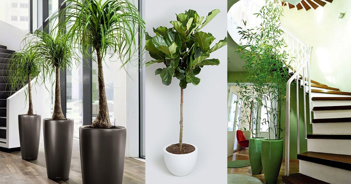 26 Best Large Indoor Plants Tall Houseplants For Home Offices