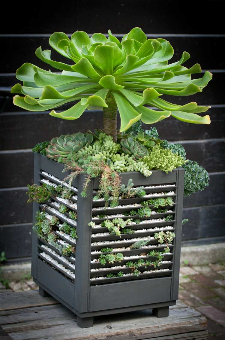 47 Succulent Planting Ideas with Tutorials | Succulent ... on Tree Planting Ideas For Backyard id=99861