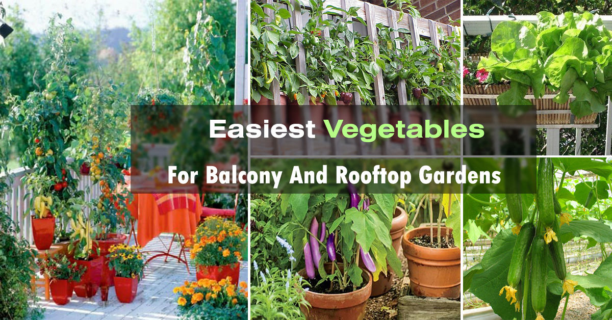 easy container vegetables for balcony