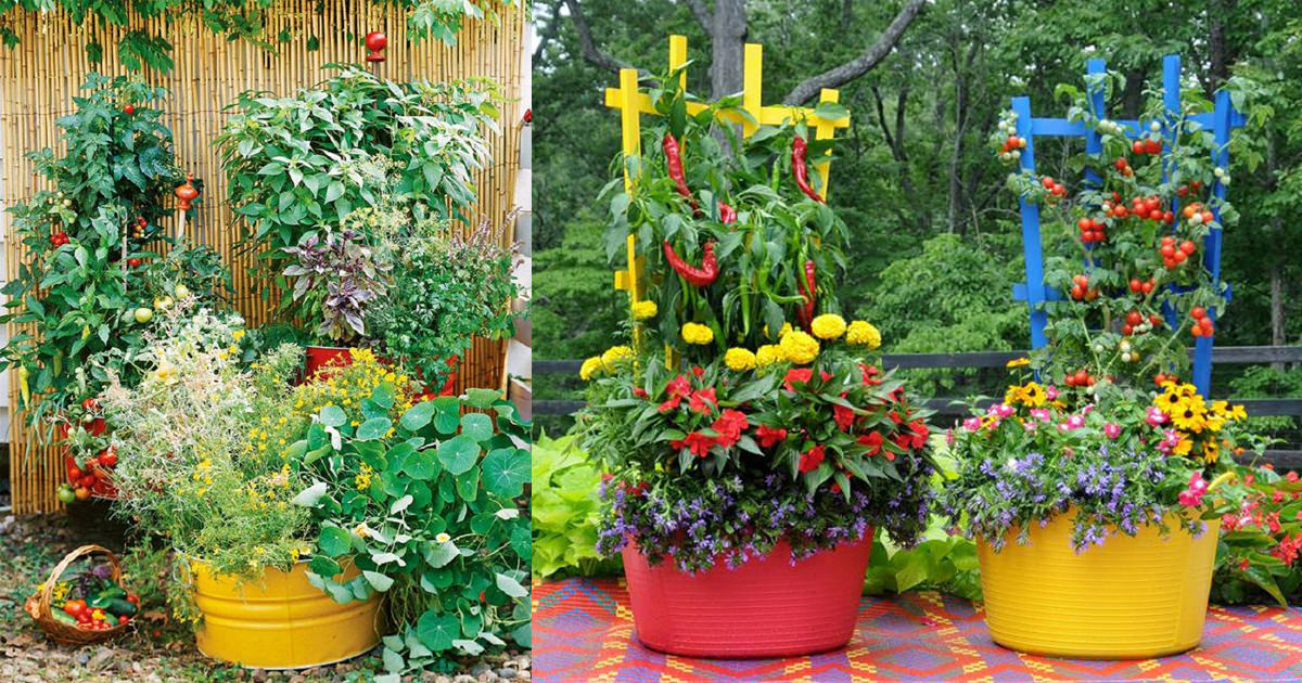 15 Stunning Container Vegetable Garden Design Ideas & Tips ... on Backyard Patio Layout id=86548