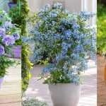 36 Best Blue Flowers To Grow In Containers Balcony Garden Web