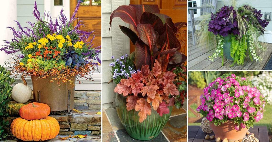 14 Great Fall Flowers For Containers Fall Flowers For Pots Balcony Garden Web