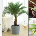 11 Nasa Approved Air Purifying Plants Safe For Cats
