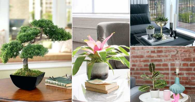 21 Best Coffee Table Plants To Grow Indoors | Balcony ...