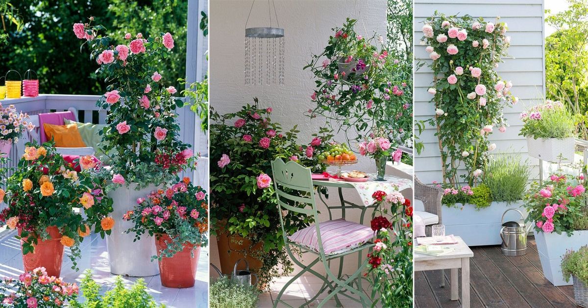 eye catching balcony rose garden pictures