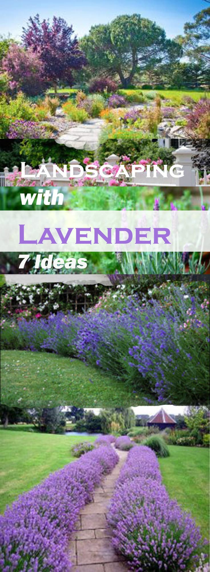 Landscaping with Lavender | 7 Garden Design Ideas on Tree Planting Ideas For Backyard id=50348