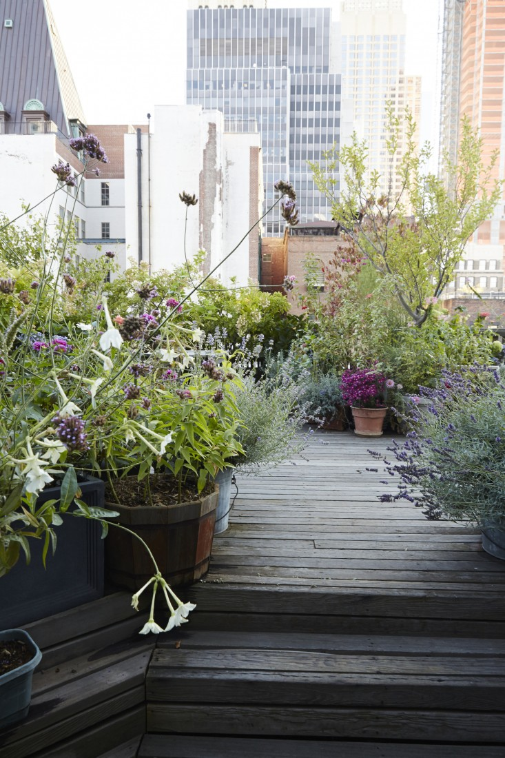 21 Beautiful Terrace Garden Images You should Look for ... on Backyard Landscape  id=15074